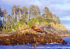 Yasha Island Sea Lions 33